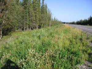 roadside plants