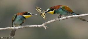 bird sharing