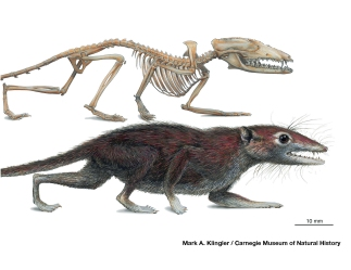 early mammal