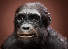 Reconstruction of sahelanthropus tchadens, who lived six to seven million years ago. (smithsonianscience.org)