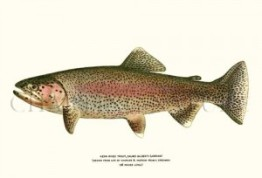 """""""rose-moles all in stipple upon trout""""  (www.belindahollyer.com)"""