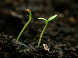 Growing implies the future. (freeorganicgardening.com)