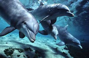 Dophins have the capacity to befriend former enemies if necessary. (s40.photobucket.com)