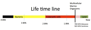 life_timeline_image