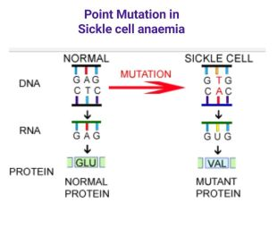 Point mutation (Pinterest)