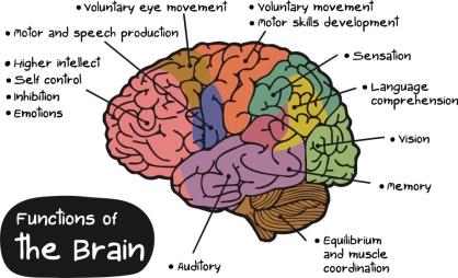 Brain functions (AWMG.INFO)
